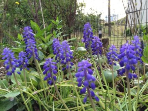 写真 2015-04-09 16 35 04