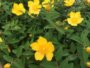 写真 2015-05-23 16 04 33