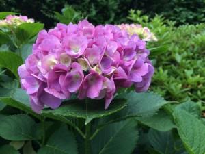 写真 2015-05-31 17 20 53