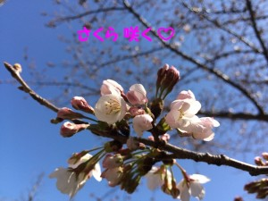 写真 2016-03-22 11 13 10